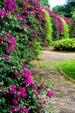 μέρος λουλουδιών Στοκ φωτογραφίες με δικαίωμα ελεύθερης χρήσης