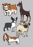 Μέρος 1 συλλογής σκυλιών Στοκ φωτογραφία με δικαίωμα ελεύθερης χρήσης