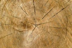 Μέρος τελών του δέντρου με τα ετήσια δαχτυλίδια και τις ρωγμές στο μέρος τελών, η σύσταση του δέντρου κατά τη διάρκεια των ετών Στοκ εικόνες με δικαίωμα ελεύθερης χρήσης