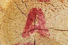 Μέρος τελών του κούτσουρου, των ετήσιων δαχτυλιδιών και της επιστολής που γράφει στο κόκκινο χρώμα, κούτσουρα δεικτών Στοκ Εικόνα