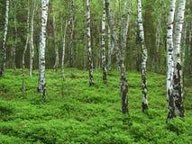 Μέρος του δάσους Στοκ φωτογραφία με δικαίωμα ελεύθερης χρήσης