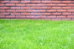 Μέρος του τούβλινου τοίχου μετά από τον πράσινο χορτοτάπητα χλόης στο πάρκο πόλεων την ημέρα άνοιξη Στοκ εικόνες με δικαίωμα ελεύθερης χρήσης