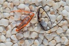 Μέρος των θαλασσινών κοχυλιών των διαφορετικών μεγεθών με τα γυαλιά Στοκ Φωτογραφία