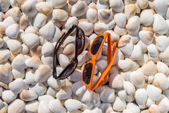 Μέρος των θαλασσινών κοχυλιών των διαφορετικών μεγεθών με τα γυαλιά Στοκ εικόνα με δικαίωμα ελεύθερης χρήσης