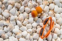 Μέρος των θαλασσινών κοχυλιών των διαφορετικών μεγεθών με τα γυαλιά και τα βερίκοκα Στοκ Εικόνα