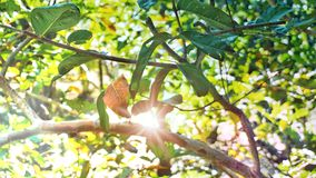 Μέρος των φυσικών πράσινων δέντρων με το φως του ήλιου Στοκ φωτογραφία με δικαίωμα ελεύθερης χρήσης