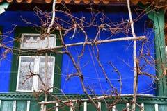 Μέρος, χρωματισμένος μπλε τοίχος, άμπελοι αμπέλων Στοκ Εικόνες