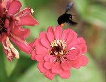 Μέσα σε ένα πορφυρό λουλούδι με ένα έντομο στοκ φωτογραφία με δικαίωμα ελεύθερης χρήσης