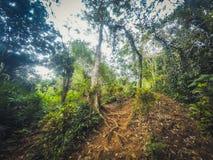 Μέσα στην τροπική ζούγκλα, μέσα στο δάσος, τοπίο τροπικών δασών Στοκ Φωτογραφία