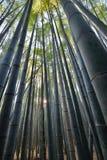 Μέσα στο αυλάκι μπαμπού σε Sagano Arashiyama Κιότο Ιαπωνία Στοκ φωτογραφία με δικαίωμα ελεύθερης χρήσης