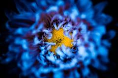Μέσα στο αφηρημένο μπλε λουλούδι στοκ εικόνα
