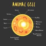 Μέσα στο ζωικό κύτταρο Στοκ Εικόνες