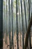 Μέσα στο μπαμπού δασικό Arashiyama Sagano Κιότο Ιαπωνία Στοκ Εικόνα