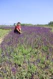 Μέσης ηλικίας γυναίκα που γονατίζει μεταξύ των λουλουδιών lavender, πλίθα rgb Στοκ Φωτογραφία
