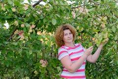Μέσης ηλικίας γυναίκα σε έναν κήπο για τα δέντρα της Apple Στοκ εικόνα με δικαίωμα ελεύθερης χρήσης