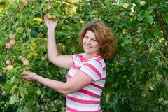 Μέσης ηλικίας γυναίκα σε έναν κήπο για τα δέντρα της Apple Στοκ Φωτογραφίες