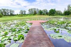 Μέση διάβασης πεζών τσιμέντου της λίμνης λωτού Στοκ φωτογραφία με δικαίωμα ελεύθερης χρήσης