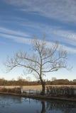 μέσος χειμώνας δέντρων Στοκ Εικόνες