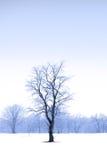 μέσο ενιαίο δέντρο χιονιο Στοκ φωτογραφία με δικαίωμα ελεύθερης χρήσης