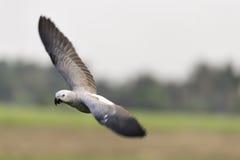 Μέσο πουλί που πετά στη φύση Στοκ Φωτογραφία