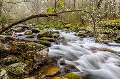 Μέσο Prong του μικρού ποταμού, μεγάλα καπνώδη βουνά Στοκ Φωτογραφίες