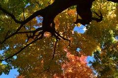 Μέσω του δέντρου Στοκ φωτογραφία με δικαίωμα ελεύθερης χρήσης