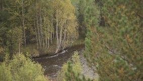 Μέσω του πεύκου και των με ιτιές κλάδων είναι ορατοί γρήγορα ποταμός και σημύδες σε άλλη πλευρά απόθεμα βίντεο