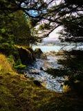 Μέσω των δέντρων Στοκ Εικόνες