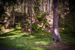 Μέσω των δασών Στοκ Φωτογραφία