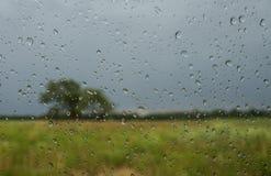 Μέσω των πτώσεων βροχής Στοκ Φωτογραφία