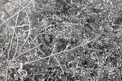 μέταλλο τσιπ Στοκ Φωτογραφίες