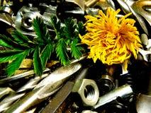 Μέταλλο λουλουδιών Στοκ Εικόνες