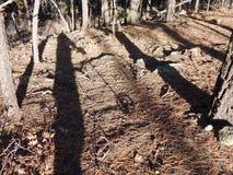 Μέταλλο που ανιχνεύει στα ξύλα Στοκ Φωτογραφίες