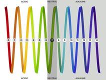 Μέτρηση της κλίμακας pH, φάσμα, infographics Στοκ Εικόνες