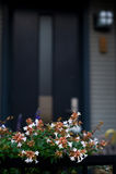 μέτωπο λουλουδιών πορτών Στοκ φωτογραφία με δικαίωμα ελεύθερης χρήσης