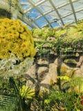 Μέτωπο λουλουδιών του νερού στοκ φωτογραφία με δικαίωμα ελεύθερης χρήσης