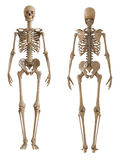 Μέτωπο σκελετών και οπισθοσκόπος Πλαστικό σχεδιάγραμμα του ανθρώπινου σκελετού Στοκ Εικόνα