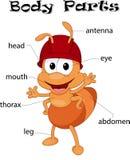 Μέλη του σώματος μυρμηγκιών ελεύθερη απεικόνιση δικαιώματος