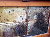 Μέλισσας Στοκ Εικόνες