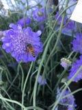 Μέλισσα-άδεια Στοκ Εικόνα