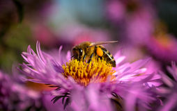 μέλισσα λίγα στοκ εικόνες με δικαίωμα ελεύθερης χρήσης