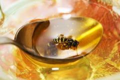 Μέλισσα επιπλεόντων σωμάτων Στοκ Φωτογραφία