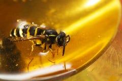 Μέλισσα επιπλεόντων σωμάτων Στοκ Εικόνες