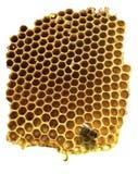 Μέλισσα εργασίας στην κίτρινη κηρήθρα στοκ εικόνα