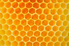 Μέλισσα και κηρήθρα Στοκ Εικόνες