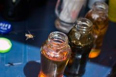 Μέλισσα και μέλι Στοκ Φωτογραφίες