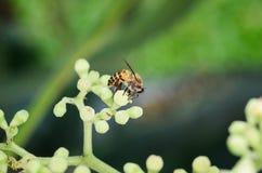 Μέλισσα και λουλούδι Στοκ Εικόνες