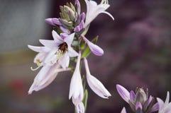 Μέλισσα και λουλούδι στοκ εικόνα με δικαίωμα ελεύθερης χρήσης