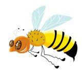 Μέλισσα κινούμενων σχεδίων που απομονώνεται στο λευκό για το σχέδιο Στοκ Φωτογραφία