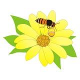 Μέλισσα κινούμενων σχεδίων που συλλέγει το νέκταρ στοκ φωτογραφίες